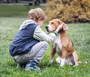 A boy kneeling to rub his beagle's ears.