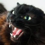 angry cat evgniyablaznova