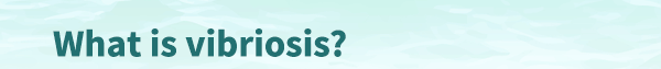 What is vibriosis?