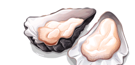 Illustrated Oyster Image