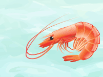 Image of cooked shrimp