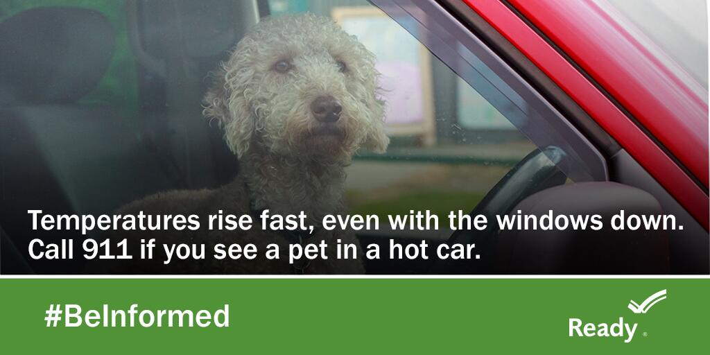 Temperatures rise fast in a car, even with the windows down. Call 911 if you see a pet in a hot car.
